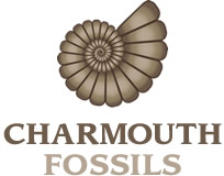 Charmouth Fossils Ltd.