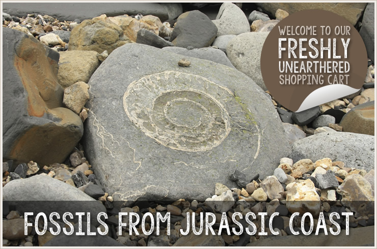 Fossils from the Jurassic Coast
